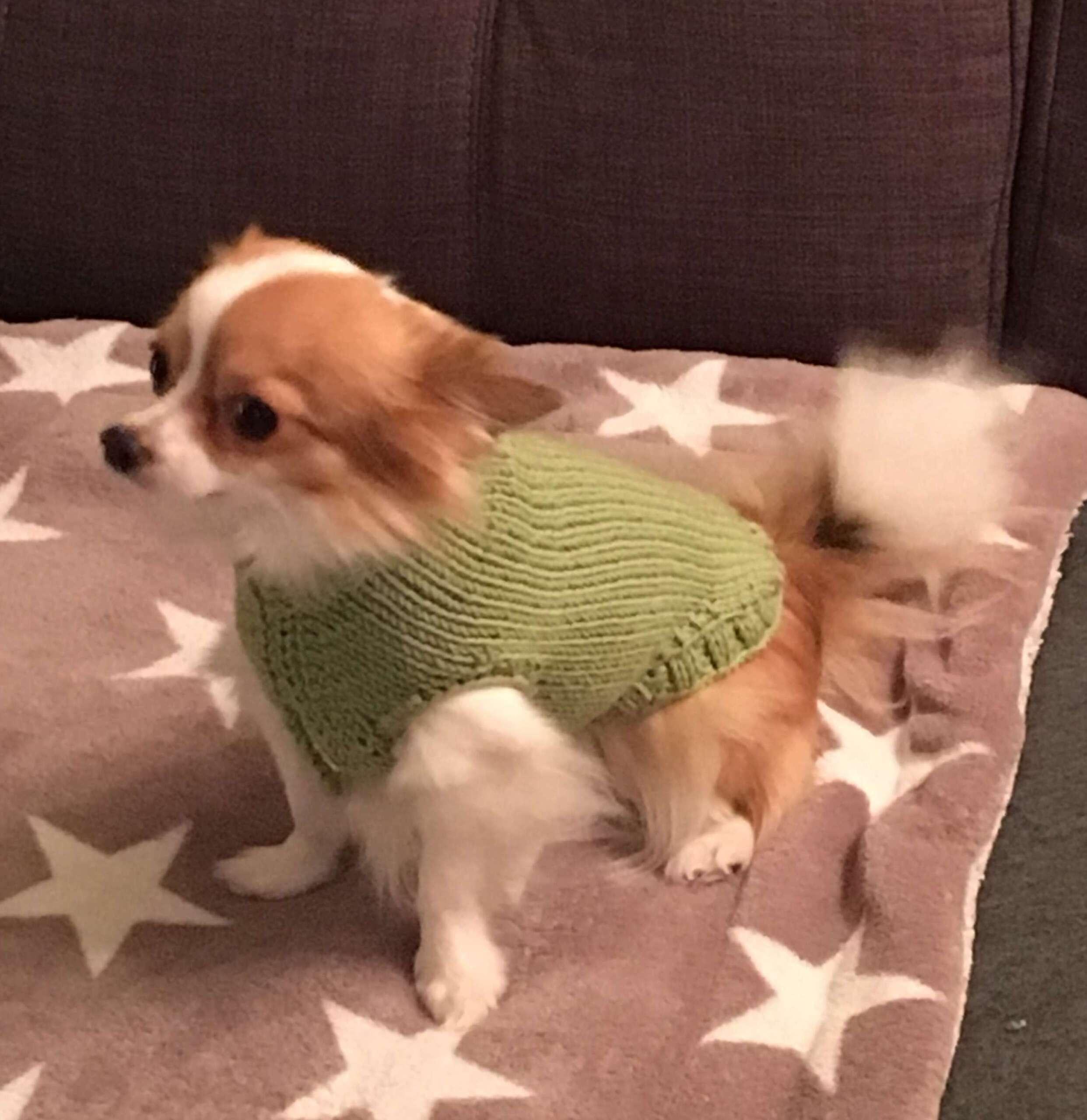Ein Pullover für den Hund?