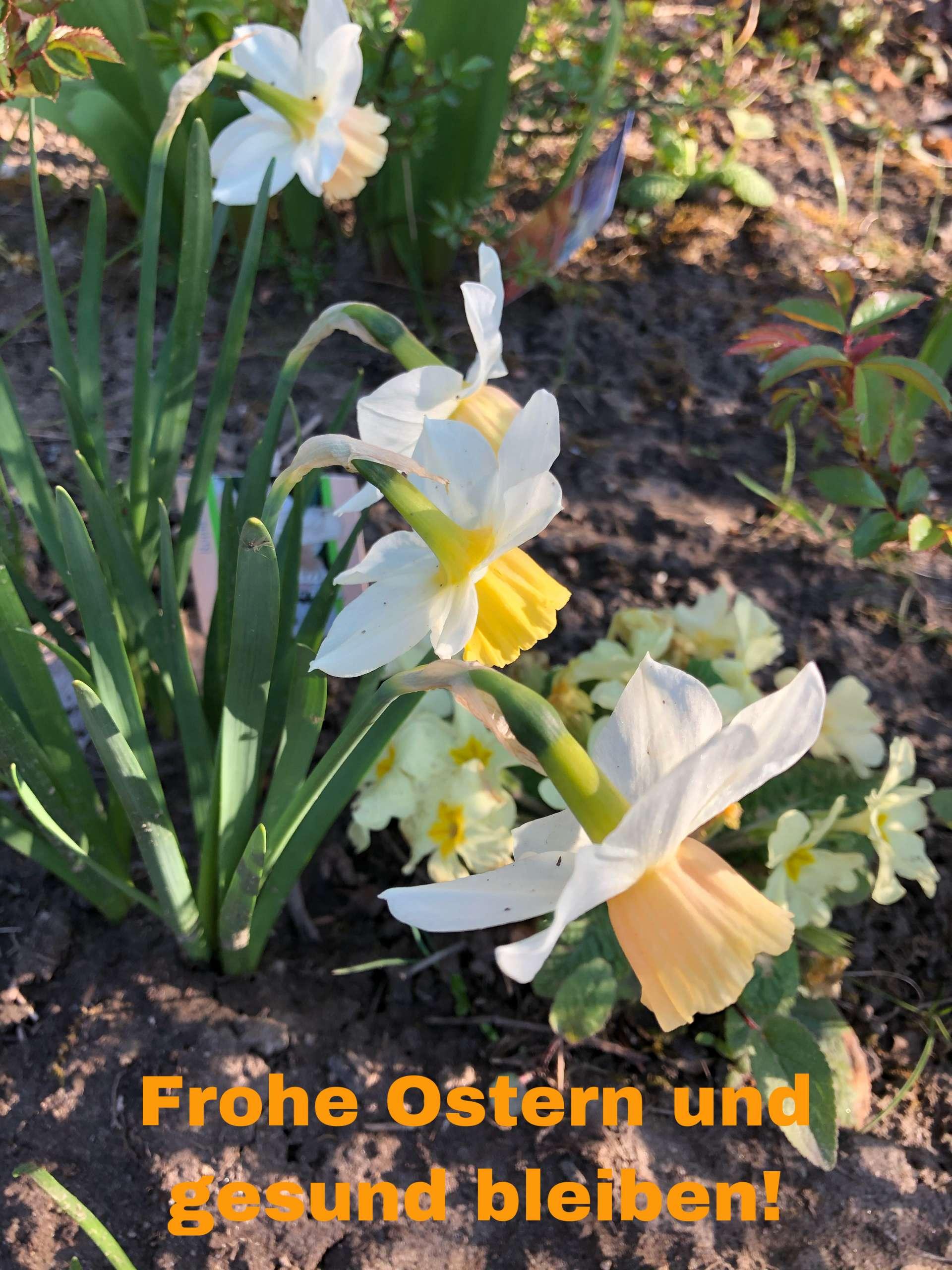 Ein frohes Osterfest und gesund bleiben!